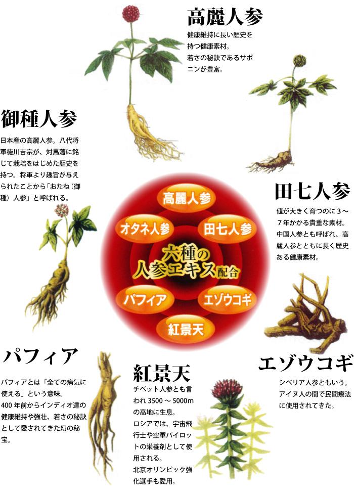 パフィア、紅景天、エゾウコギ、田七人参、御種人参、高麗人参 6種のニンジンの説明