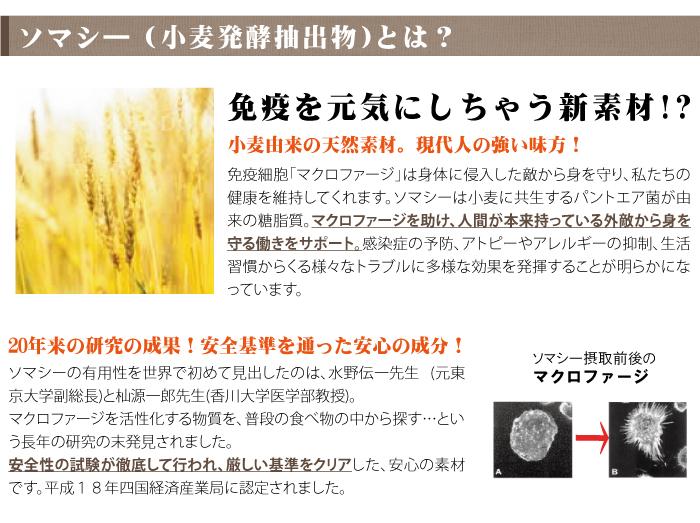ソマシー(小麦発酵抽出物)とは?免疫を元気にする新素材。